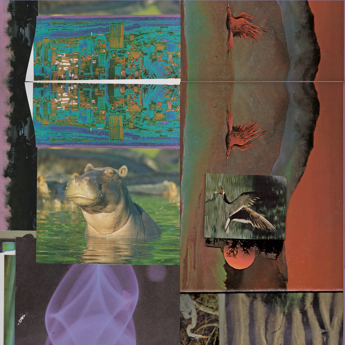 Pacific Yew – ((( Bathing)))